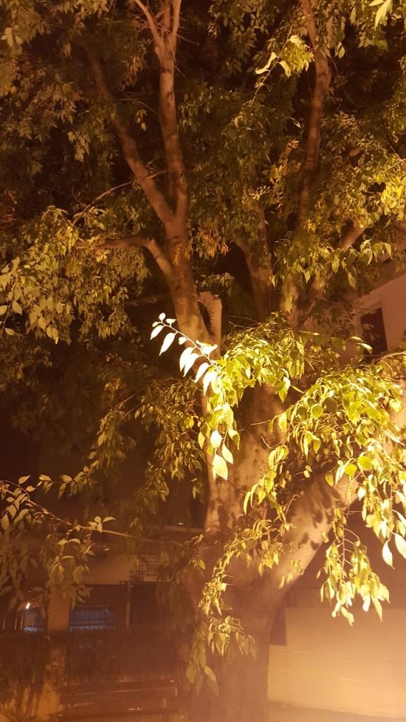 Galaxy S6 - Arbre de nuit