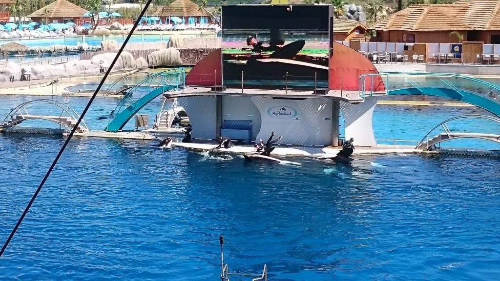 Marineland - Spectacle des orques