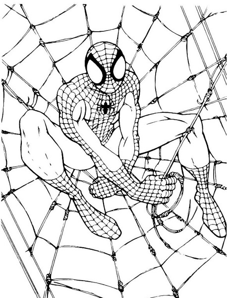 Dessin Colorier Spiderman - Coloriage Spider Man Toile Piege | Karnivora's