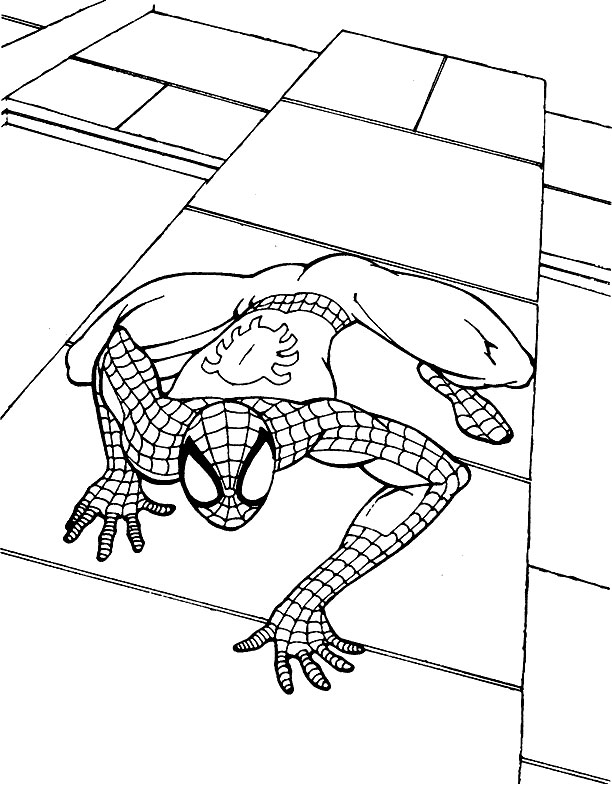 Spiderman à colorier - Sur la façade d'un building