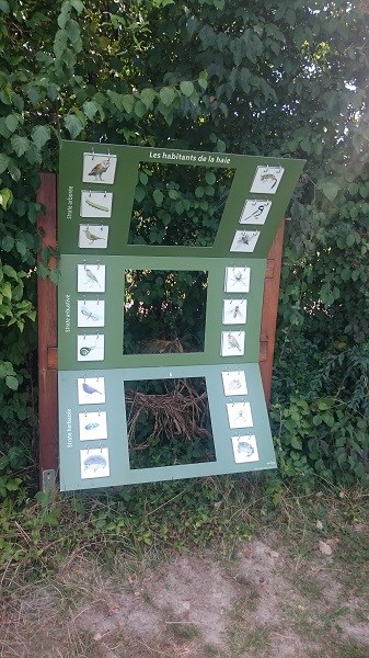 Découverte de l'îLoz de Miribel-Jonage - Les habitants de la haie naturelle du jardin