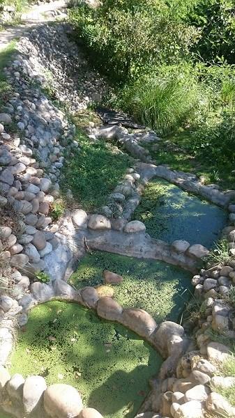 Découverte de l'îLoz de Miribel-Jonage - Les mares en escalier