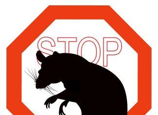 Comment se débarasser des nuisibles - rats guêpes moustiques - Astuces et conseils