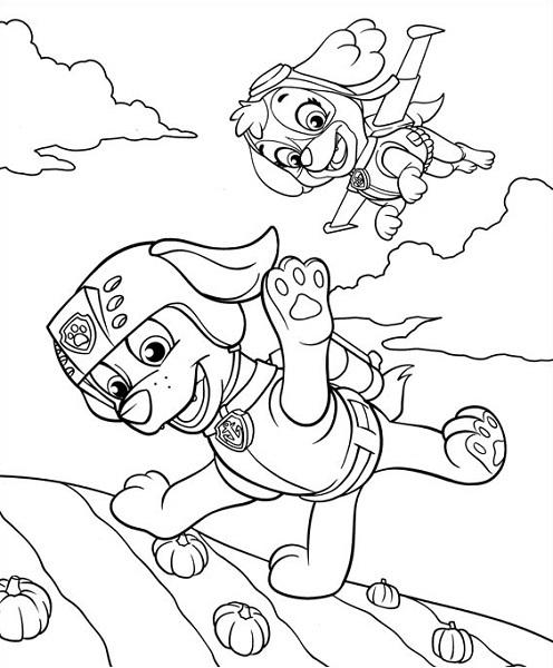 Coloriage et dessin Pat Patrouille - Dessin à colorier de Stella qui lance Zuma dans les airs