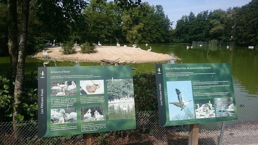 Parc aux oiseaux Villars Les Dombes - découverte avis et visite - L'étang des pélicans 1