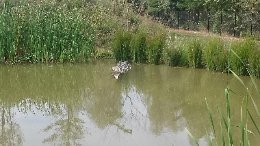 Parc aux oiseaux Villars Les Dombes - découverte avis et visite - Le bush australien 1