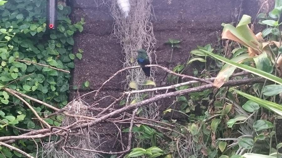 Parc aux oiseaux Villars Les Dombes - découverte avis et visite - Les magnifiques colibris 1