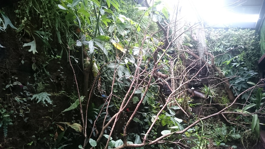 Parc aux oiseaux Villars Les Dombes - découverte avis et visite - Les magnifiques colibris 2