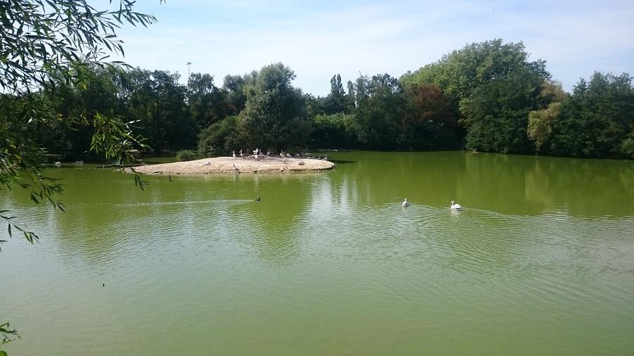Parc aux oiseaux Villars Les Dombes - découverte avis et visite - L'étang des pélicans 2