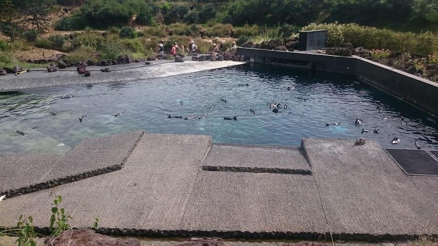 Parc aux oiseaux Villars Les Dombes - découverte avis et visite - La crique des manchots 1