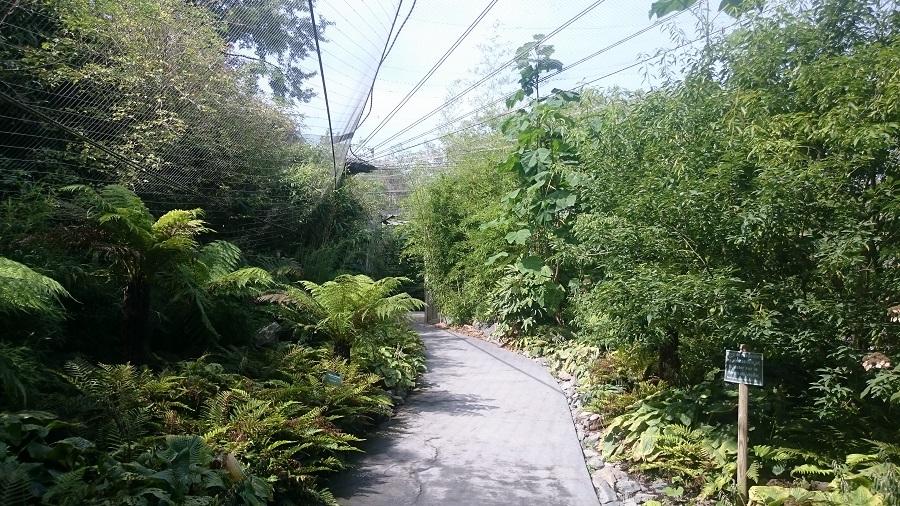 Parc aux oiseaux Villars Les Dombes - découverte avis et visite - La jungle tropicale 1