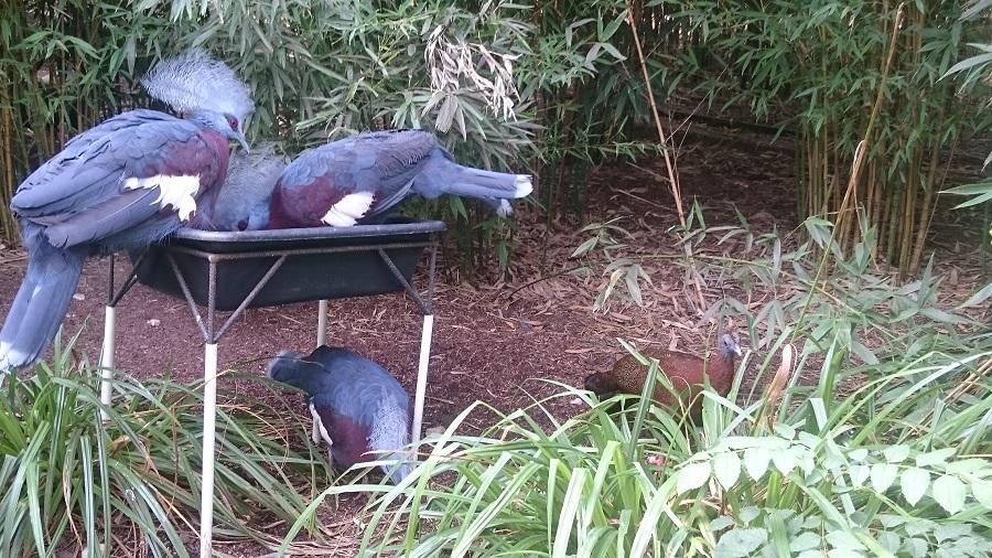 Parc aux oiseaux Villars Les Dombes - découverte avis et visite - La jungle tropicale 3