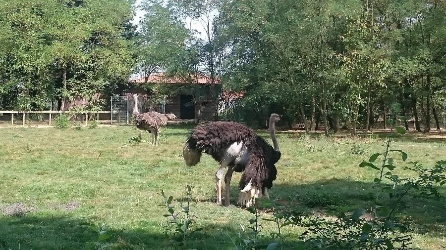 Parc aux oiseaux Villars Les Dombes - découverte avis et visite - La plaine africaine