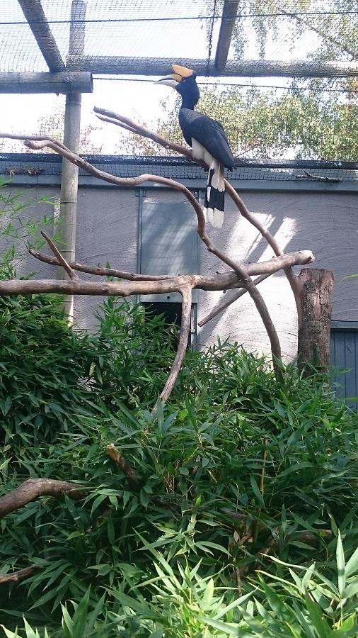 Parc aux oiseaux Villars Les Dombes - découverte avis et visite - Le calao rhinocéros de Java