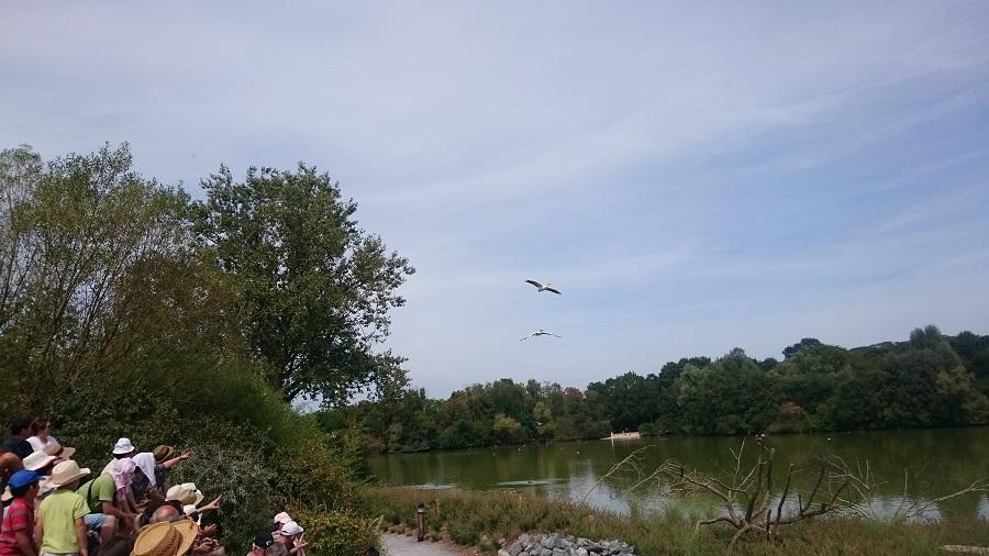 Parc aux oiseaux Villars Les Dombes - découverte avis et visite - Le spectacle des oiseaux 1