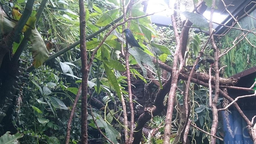 Parc aux oiseaux Villars Les Dombes - découverte avis et visite - Les magnifiques colibris 3