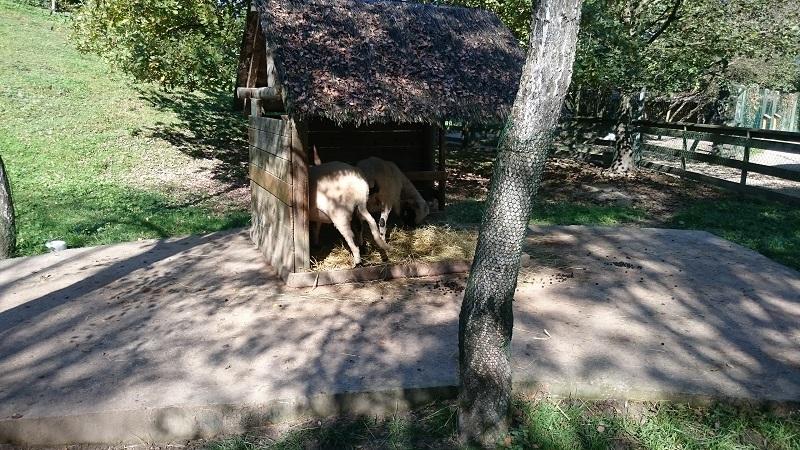 Découverte et avis sur Walibi Rhône-Alpes - Attraction Mini-ferme 3