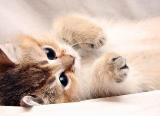 Pourquoi adopter un chaton en été
