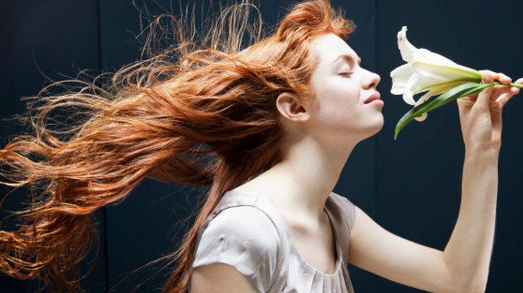 Aromachologie - Définition et explications