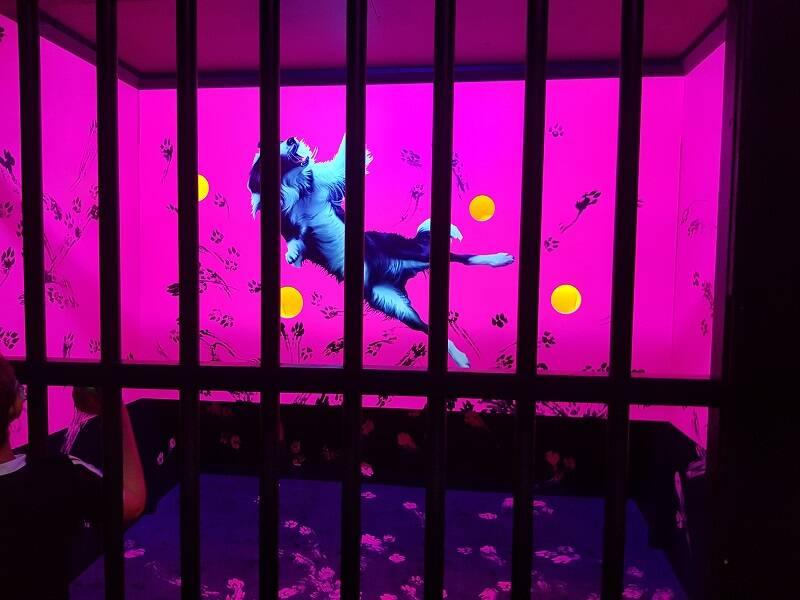 Test d'une salle de l'escape game d'Exalto